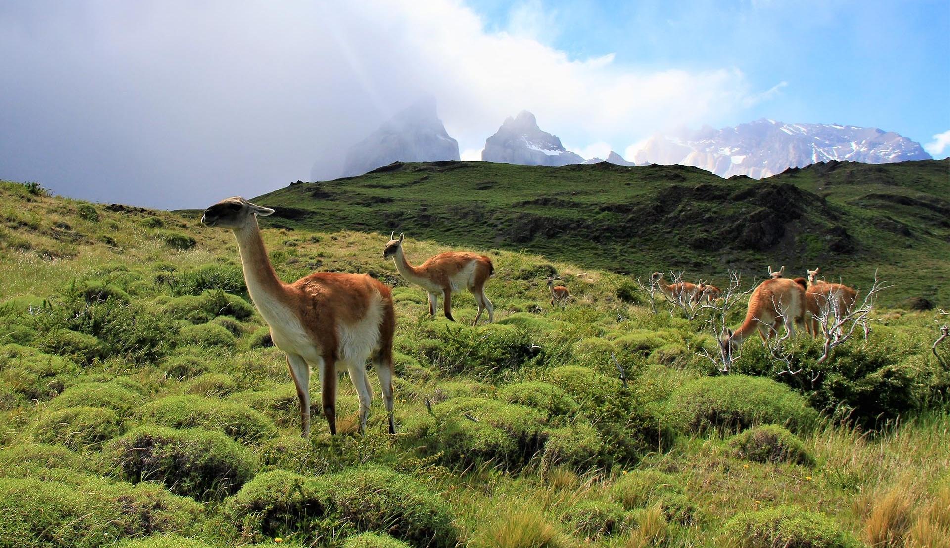 Patagónia – Chile